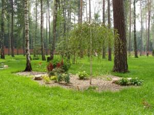 Ассортиментный список кустарников
