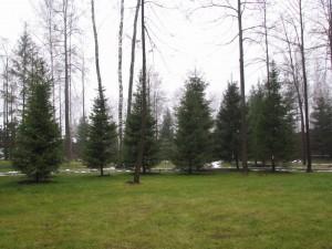 Группы деревьев