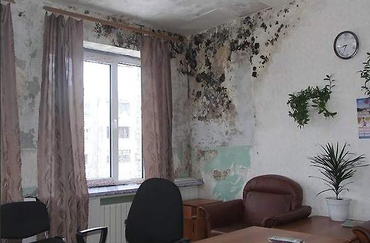 Возникновение плесени и грибка на стенах квартиры или дома