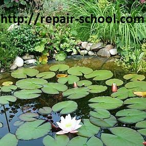 растения для искуственного пруда