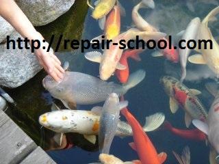 рыбкы для искуственного пруда