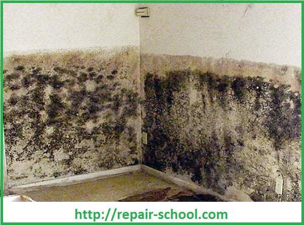 Поражение стен погреба и подвала грибком и плесенью