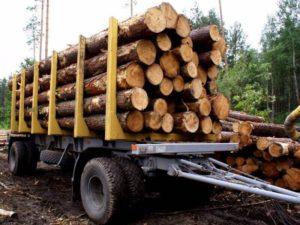 Полезная техника для лесного хозяйства